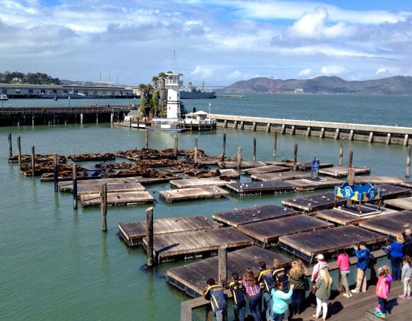 Sea Lion at Pier 39